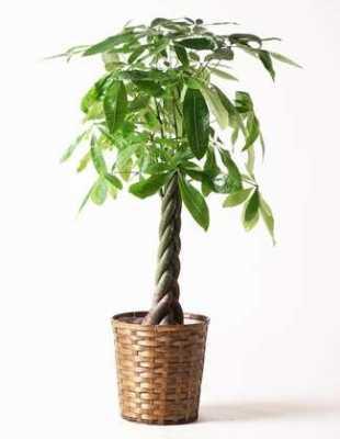 観葉植物は必要?
