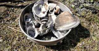 貝殻を石灰にする (1)